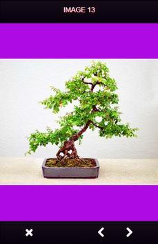 Bonsai Tree Idea apk screenshot