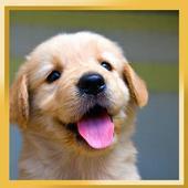 Cute Pups icon