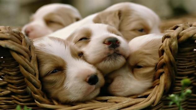 Cute Pups poster