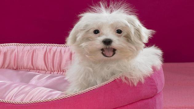 Cute Pups screenshot 2