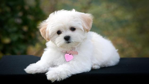 Cute Pups screenshot 3