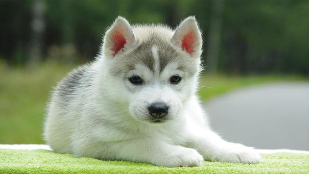 Cute Pups screenshot 4