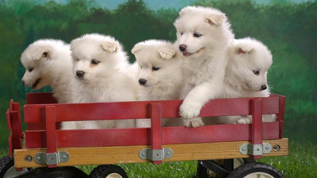 Cute Pups screenshot 5