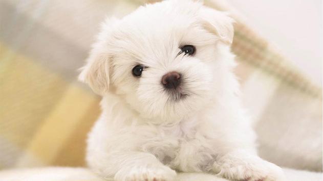 Cute Pups screenshot 6