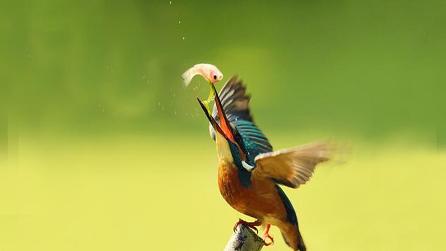 Exotic Birds apk screenshot