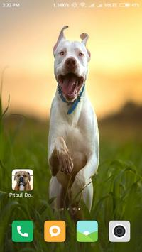Pitbull Dog Wallpapers poster