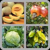 Fruit Quiz Game icon