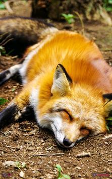 Animal Wallpapers apk screenshot