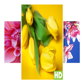 Flower Wallpaper icon