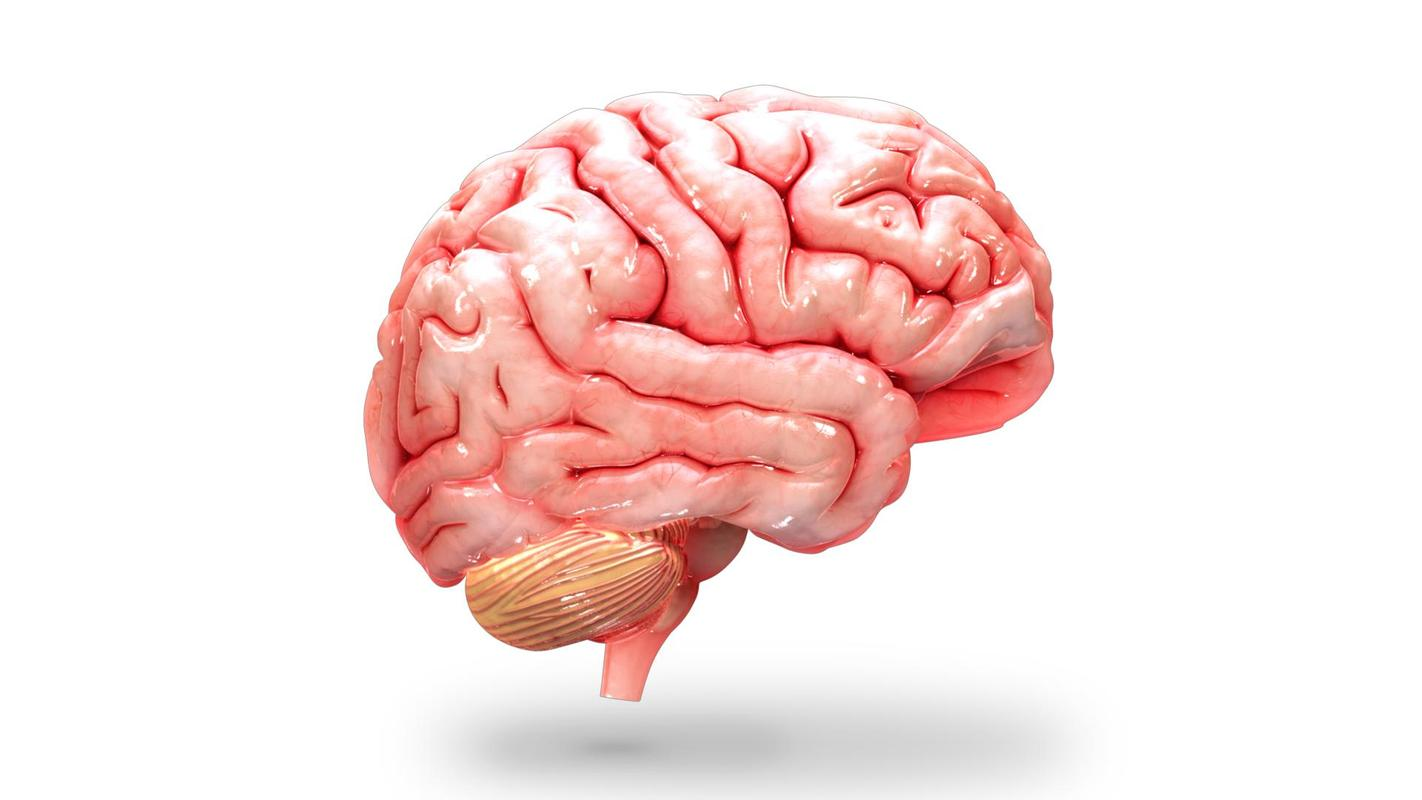 VR Human Brain APK Download - Free Education APP for Android ...