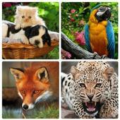 Animal World Puzzles icon