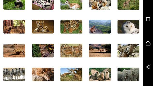 Animal World Puzzles screenshot 4