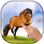 Magic Touch - Racing Horses icon