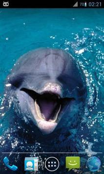 Magic Ripple : Cute Dolphin poster