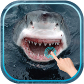Magic Touch Shark Attack icon