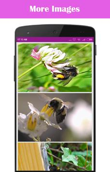 Bumble Bees on Your Screen poster