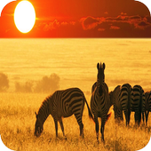 African Animals Background icon