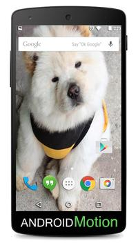 Chow Chow Background poster