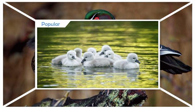 Duck Wallpaper screenshot 1