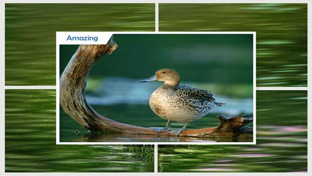 Duck Wallpaper screenshot 2