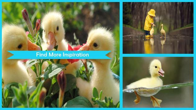 Duck Wallpaper screenshot 4