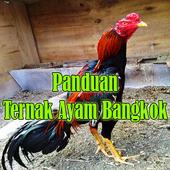 Panduan Ternak Ayam Bangkok Petarung icon