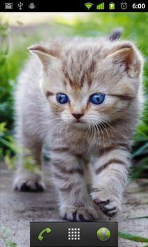 cute cat live wallpaper apk screenshot