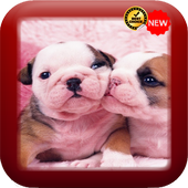 Cute Baby Dog Wallpaper icon