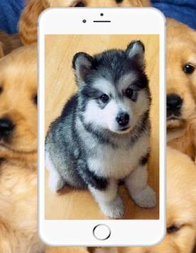 Cute Baby Dog Wallpaper screenshot 1