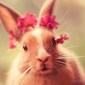 أرنب لطيف Lwp أيقونة