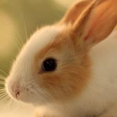 cute bunny live wallpaper icon