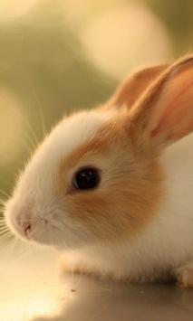 cute bunny live wallpaper poster