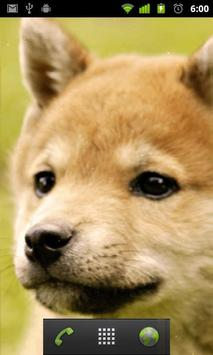 cute dog live wallpapers apk screenshot