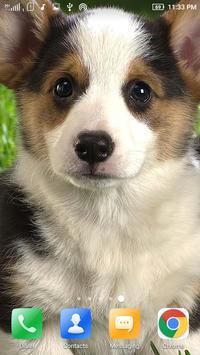 Puppy Dog Wallpaper poster