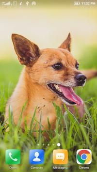 Puppy Dog Wallpaper apk screenshot