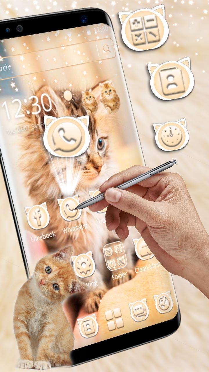 Download 63+  Gambar Kucing Hidup Lucu Imut