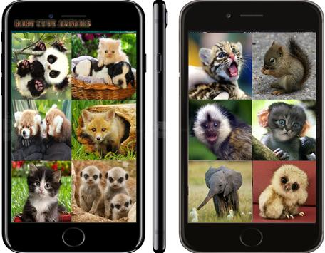 CUTE BABY ANIMALS poster