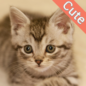 Cute Cat Wallpapers icon