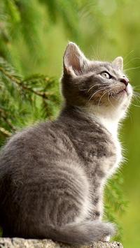 Cute Cat Wallpapers screenshot 3