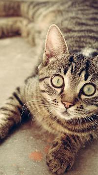 Cute Cat Wallpapers screenshot 1