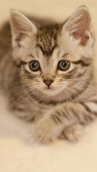 Cute Cat Wallpapers screenshot 5