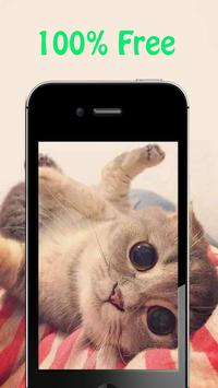 Cute Cat Wallpapers apk screenshot