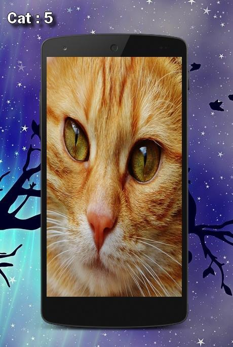 Cute Cats Wallpapers Hd Beautiful For Android Apk Download
