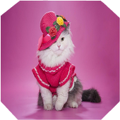 Cute Cat Gallery icon