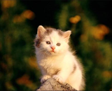 Cute Cat Gallery poster