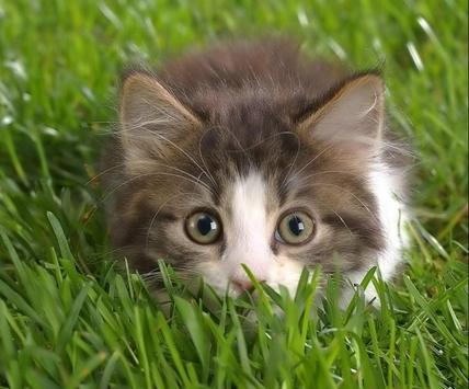 Cute Cat Gallery screenshot 5