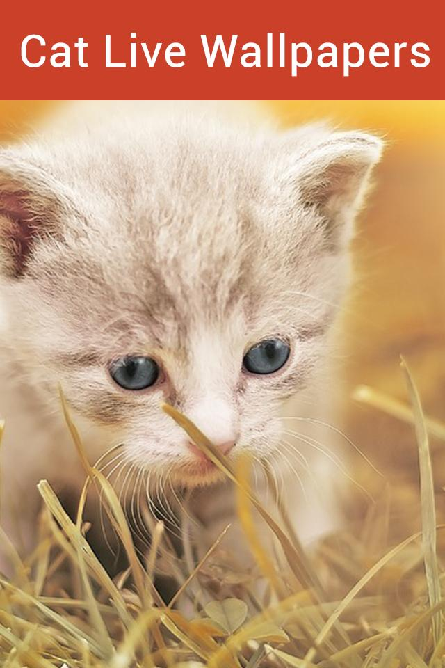 Cute Cat Live Wallpaper Animated Cat Hd Wallpaper For Android Apk Download