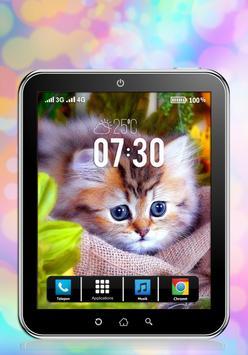 Cute Kitten Wallpapers apk screenshot