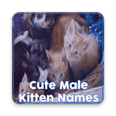 Male Cat Names for Android - APK Download