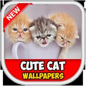 Cute Kitten New 2017 icon